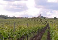Vinotéka Brno - páteční degustace vín rodinného vinařství Vinopa Rakvice