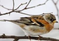 Pták roku 1992 – 2016