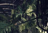 Valentýnský večer v botanické