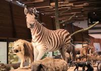 Rekordmani a rarity zvířecího světa – komentovaná prohlídka expozice Archa Noemova