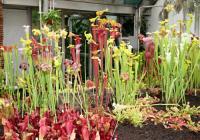 Výstava masožravých rostlin a výstava výtvarných prací žáků ZUŠ Veveří