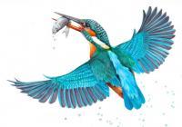 Barevné klenoty naší ptačí říše