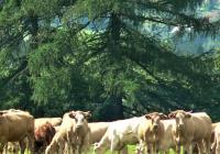 ScienceCafé: Ekologické zemědělství pro každého