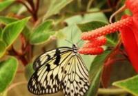Lehkost motýlích křídel