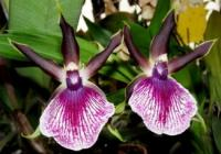 Výstava orchidejí, bromélií, sukulentů, jiných exotických rostlin a hmyzu