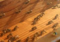 Výstava Království včel II