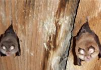 Mezinárodní noc pro netopýry v Zoo Jihlava
