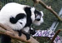 Štědrý den v Zoo Ústí nad Labem