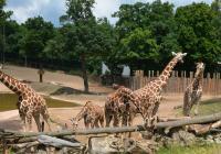 Běh brněnskou zoo