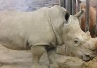 Světový den nosorožců - Zoo Dvůr Králové nad Labem