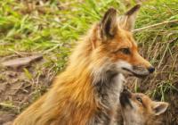 Zvířata a jejich děti