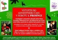 Advent v Zoo Plzeň