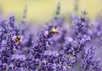 Novoměstské slavnosti medu