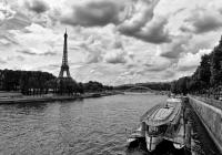 Madamme de Paris - Art for Charity