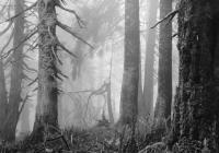 Mýtus lesa / Arnošt Hrabal