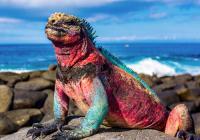 Cestovatelská přednáška* – Galapágy