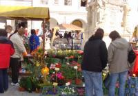 Květinová Třeboň