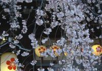 Jarní Kjóto