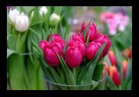 Ples jara a přátel vína - Litoměřice