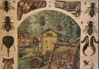 115 let včelařství v Napajedlích