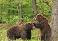 Virtuální prohlídky Zoo Brno