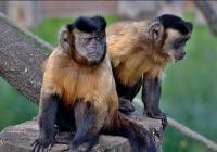 Prohlídka Zoo Tábor 2020