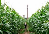 Kukuřičné bludiště Praha – Zahradní Město