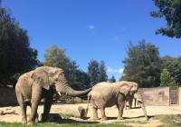 Otevření venkovních prostor - Zoo Dvůr Králové