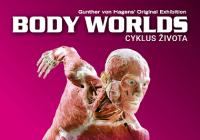Body Worlds / Cyklus života