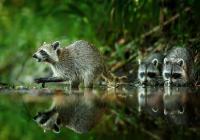 Příběhy fotografií zvířat