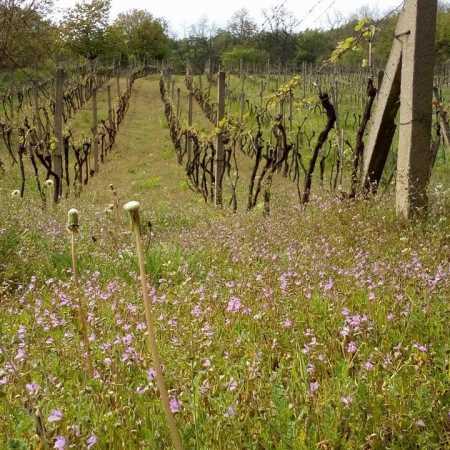 Living Wines – festival naturálních vín