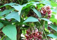 Exkurzi do zahradnictví našich prababiček nabízí nová výstava v Botanické zahradě