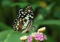 Obdivovatelé motýlů se mohou začít těšit. Od dubna jim bude patřit skleník Fata Morgana v Botanické zahradě hl. m. Prahy
