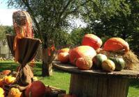 Výstava dýní zdobí podzimní Botanickou zahradu