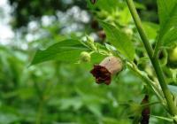Léto v Botanické zahradě bude patřit jedovatým rostlinám