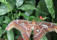 Jaro zavítalo do Fata Morgany: Tropičtí motýli se chlubí celým spektrem barev