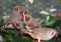 Výstava exotického ptactva, morčat a dalších chovaných zvířat