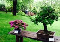 Jak na bonsaje, se dozvíte v trojské Botanické zahradě. Zn.: do neděle!