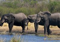 """Přednáška """"F. Pelc: Afrika – mizející přírodní ráj"""""""