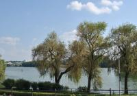 Rybník Vajgar, Jindřichův Hradec