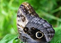 Výstava exotických motýlů se vrací do botanické zahrady