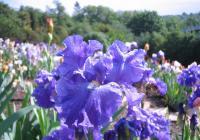 Květomluva aneb rostliny k nám promlouvají