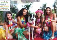 Dostihy chrtů Hawaii v Greyhound Park Motol Praha