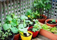 Zeleninová zahrádka na balkóně