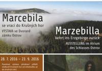 Marcebila se vrací do Krušných hor