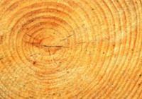 Krásná dřeva krásných stromů