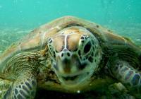 Želví slzy aneb Ochrana mořských želv v Indonésii