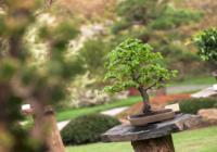 Setkání bonsajistů