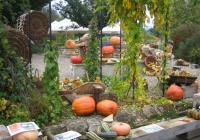 Dýňový podzim