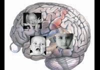 ScienceCafé: Kde v mozku sídlí emoce?